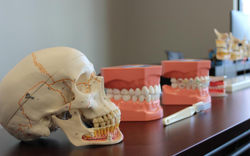 dental skull and teeth image